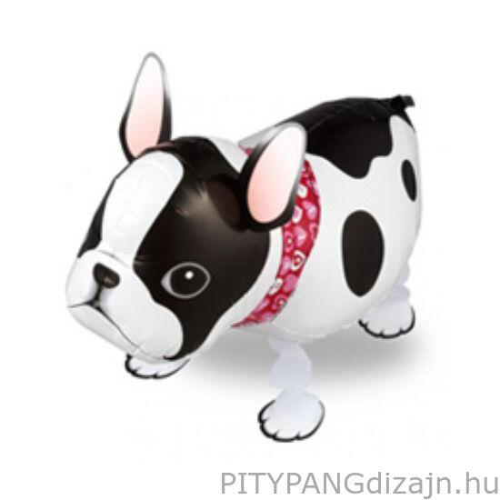 Lufi / Sétáló francia bulldog
